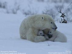National Geographic, 2005, nature photo, animals photo