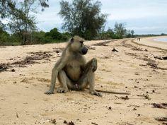 Shameless monkey, otherwise very friendly! Find Hotels, Best Hotels, Cheap Accommodation, Sky Full Of Stars, Tanzania, Warm Weather, Monkey, Safari, National Parks
