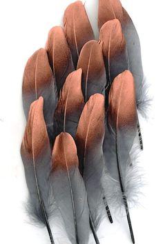 Oie avec pointe bronzée - 15-21 cm - anthracite - Plumes.fr