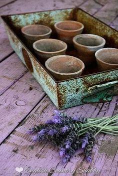 Rusty tray with lavender and terra cotta pots Lavender Blue, Lavender Fields, Lavander, Jardin Decor, Malva, Terracota, Plantar, Terracotta Pots, Clay Pots