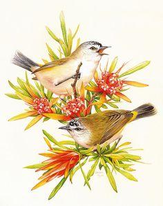Beautiful Australian Birds. Обсуждение на LiveInternet - Российский Сервис Онлайн-Дневников