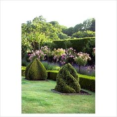 Hedges in different shapes
