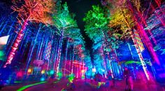 Dancing at the Electric Forest was the highlight of my summer.