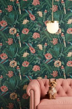 Paradisa Wallpaper | Anthropologie Parrot Wallpaper, Palm Leaf Wallpaper, Unique Wallpaper, Of Wallpaper, Flower Wallpaper, Designer Wallpaper, Apple Wallpaper, Bathroom Wallpaper, Lucky Wallpaper