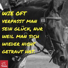 Pferdesprüche & Vitamine Pferd-emma-pferdefuttershop.de (7) 2