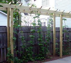 60 Best Backyard Ideas Images Backyard Deck With 640 x 480