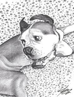 Pet Portrait Custom Pet Portrait Dog Art Pencil by ArtThruZ