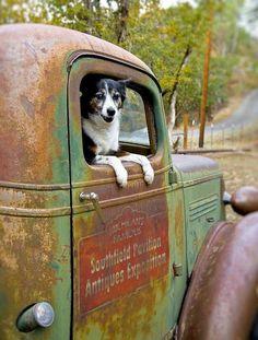 old pickup trucks Old Pickup Trucks, Farm Trucks, Jeep Pickup, Chevy Trucks, Lifted Trucks, Pickup Camper, 4x4 Trucks, Diesel Trucks, Country Trucks