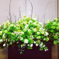 How beautiful. Spirea, Snowball Vibernum & Cherry Blossoms bloom in The Hazelton Hotel's lobby.