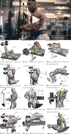 How to enlarge the triceps ?How to enlarge the triceps – # increased ?How to enlarge the triceps ?How to enlarge the triceps – # increased Fitness Workouts, Gym Workout Tips, Biceps Workout, Strength Training Workouts, Shoulder Workout Routine, Best Chest Workout, Chest Workouts, Chest And Tricep Workout, Back Weight Exercises