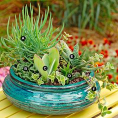Grow succulents in containers for easy-care color in any sunny, dry site.