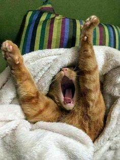 yawningnight