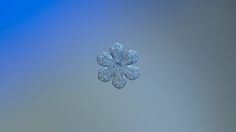 """Real snowflake photo - Forget-me-not - Real snowflake, sparkling on smooth blue-gray gradient background. My prints: <b><a href=""""http://pixels.com/profiles/alexey-kljatov.html"""">Pixels.com</a>, <a href=""""http://redbubble.com/people/chaoticmind75"""">RedBubble.com</a></b>. Commercial licenses: <b><a href=""""https://500px.com/search?q=chaoticmind75&type=market"""">Marketplace</a></b>."""