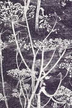 Discover hundreds of wallpaper ideas on HOUSE - design, food and travel by House & Garden including Cow Parsley by Cole & Son