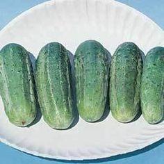 Pase Seeds - Cucumber Wisconsin Smr58 Vegetable Seeds, $3.49 (http://www.paseseeds.com/cucumber-wisconsin-smr58-vegetable-seeds/)