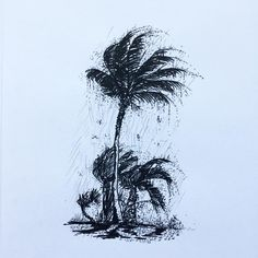 """56 Likes, 1 Comments - W.W. Pierce (@willustrating) on Instagram: """"Rainy palm tree because it's been raining SO MUCH.  #illustration #illustrator #drawing #draw…"""""""