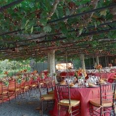 "A ""roof"" of sycamore trees really sets the tone for this garden wedding!"