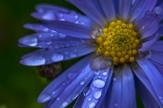 Crying flower by Ole Morten Eyra