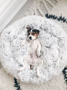 DIY Dog Bed: See 37 Cute ideas and tutorials Cute Dog Beds, Puppy Beds, Diy Dog Bed, Cute Dogs, Pet Beds, Cute Dog Stuff, Plush Dog Bed, Puppy Obedience Training, Basic Dog Training
