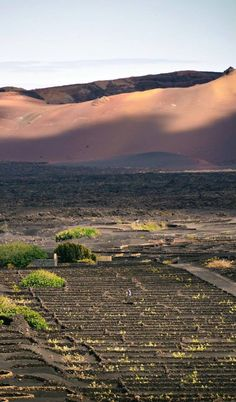 DESEARÁS QUEDARTE  A lo mejor ya tienes la suerte de conocer esta Isla. O desde ahora, con su imán, cambiará tu suerte... Cuando la conoces por primera vez sentirás 'el efecto Lanzarote'. Desearás quedarte.  Imagen de Monso Pérez en el Parque Natural de La Geria, Yaiza, Tías y Tinajo, Lanzarote.