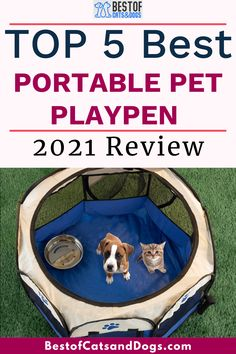 Pet Playpen Is Great For Indoors, Outdoors, Traveling, And Camping. Sets Up In Seconds And Requires No Assembly. Keeps Your Pet Safe And Secure. Check Out Our TOP 5 Best Portable Pet Playpen Review. Read More Here! #Playpen #PetPlaypen #PortablePetPlaypen #Dogs #Cats #Affiliate