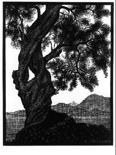 M.C. Escher. Old Olive Tree, Corsica. 1934. (wood engraving)