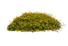 10 Free Plants & Flowers PNG Images- at Dzzyn.com - yellow flowers bush 02