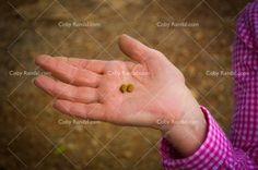 israel-carob-seeds