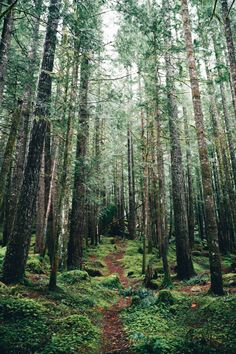 intotheclearing: byKyle Kuiper