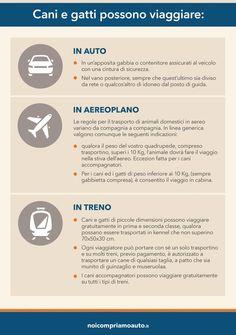 Infografica 2