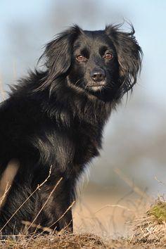 Markiesje Puppy Dogs #Puppies #Dog