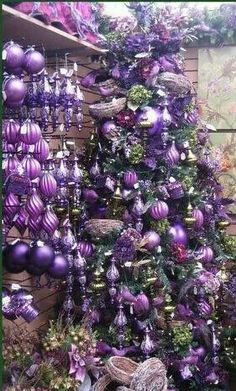 Purple Christmas beauty