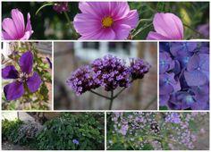 HAVEHJERNEN: september 2013 Blomster i højsommeren