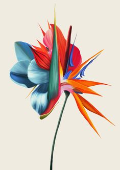 Official site of the visual artist Rocío Montoya. Illustration, collage, mixed media and photography Kandinsky, Botanical Illustration, Digital Illustration, Paradise Tattoo, Botanical Flowers, Abstract Flowers, Mixed Media Collage, Flower Art, Art Sketches