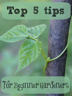 Top 5 tips for beginner gardeners