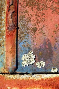 Growth And Decay, Peeling Paint, Nature Artwork, Rusty Metal, Art Graphique, World Of Color, Abstract Photography, Texture Art, Wabi Sabi