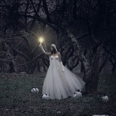 dark forest photos - Google Search