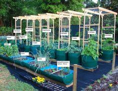 Blue barrell gardening