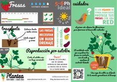 Infografía de cómo #cultivar fresas en #casa