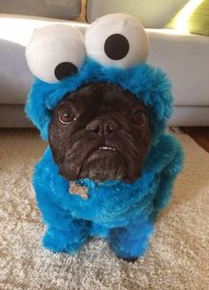 Cookie Monster costume for pugs! All pugs should wear theses. Baby Animals, Funny Animals, Cute Animals, Animals Images, Pug Love, I Love Dogs, Costume Chien, Cute Puppies, Cute Dogs