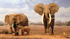 Widescreen Animal HD Wallpapers 1920×1080 Elephants Family