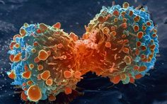 Cancer database could save thousands of lives