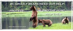 Find us on Facebook. Help end the Grizzly Bear hunt in British Columbia, Canada.