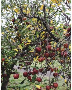 Hurry up!  Anticipating abundance xo  from @countrystylemag . . . #bounty #abundance #apples #livethelittlethings #anticipation #summer