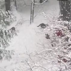 Fox cubs playing in the snow. - Deneice Mc - Fox cubs playing in the snow. Fox Cubs playing in the snow - Funny Animal Videos, Cute Funny Animals, Cute Baby Animals, Funny Cute, Animals And Pets, Wild Animals, Animals In Snow, Beautiful Creatures, Animals Beautiful
