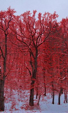 Red and white contrast as fall and winter merge!