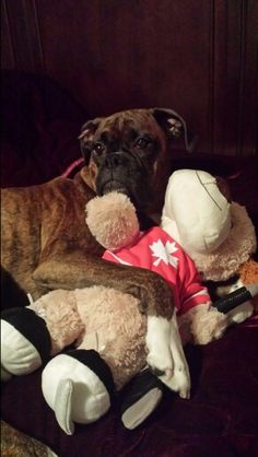 """I love my new Christmas Toy!!"" #Boxer"