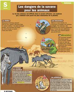 Fiche exposés : Les dangers de la savane pour les animaux