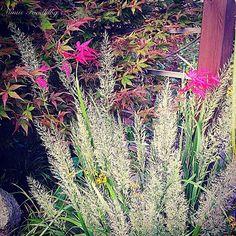 Schönen Sonntag Morgen ihr Lieben ❤️ Es herbstelt ganz gewaltig und ich freue mich heute auf einen schönen und gemütlichen Tag zu Hause. War die letzten Tage viel unterwegs.  Lasst es Euch gut gehen 🌞  #mimisfoodblog #gutenmorgen #goodmorning #garden #hamburg #derechtenorden #herbst #herbstzeit #herbst🍁🍂🍃 #herbstfarben #autumn #autumn🍁🍂🍃 #autumnleaves #autumnday #sunday #sonntag #colourofnature #colourofautumn #autumnlove #autumnlovers #nature #naturelovers #nature_perfection