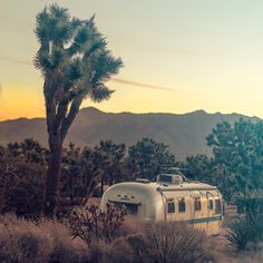 My Winter Travel Style and Glamping in Joshua Tree National Park